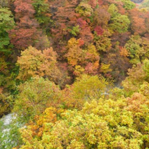 【四季折々の季節が楽しめる】森の大橋から見た紅葉