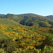 【四季折々の季節が楽しめる】八幡平頂上付近の紅葉