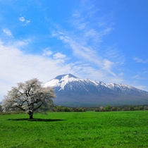 ホテルよりお車で約10分にある上坊野の1本桜