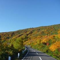 【四季折々の季節が楽しめる】樹海ラインの紅葉