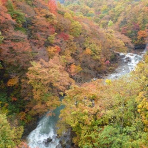紅葉の森の大橋