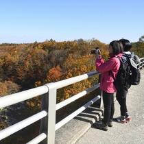 【松川渓谷にかかる森の大橋】ホテルから徒歩圏内の紅葉スポット。