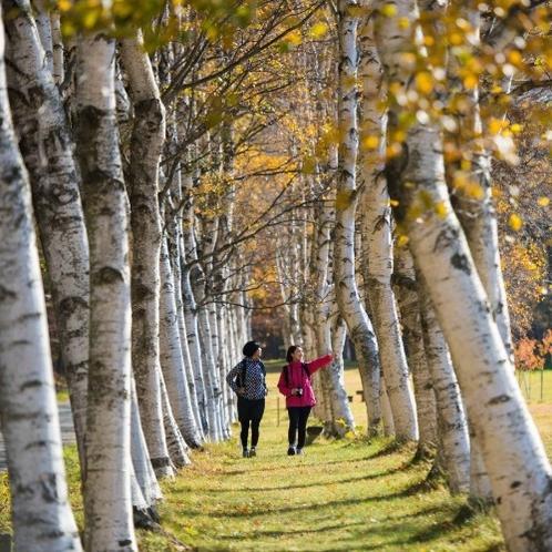 【岩手県民の森】お散歩に最適です。並木道を歩きながら、被写体を探してみてください。