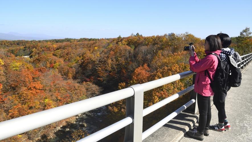 松川渓谷にかかる森の大橋