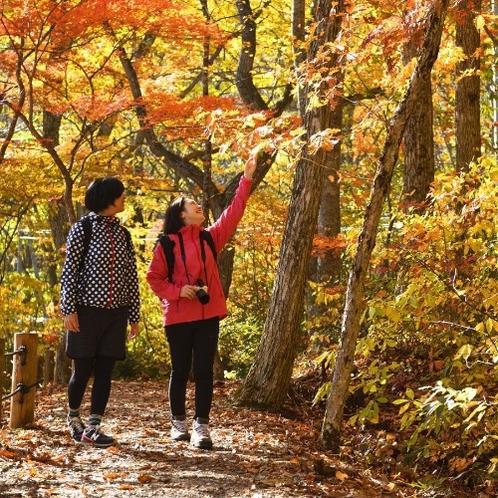 【松川渓谷遊歩道】ホテルから徒歩20分のお散歩コース。紅葉の時期が一番のおすすめ!