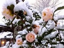 【冬の椿】
