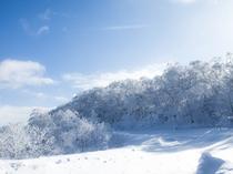 オロフレ峠樹氷