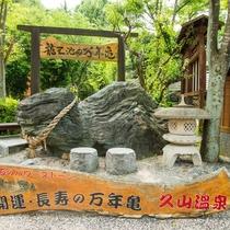 龍王池の万年亀