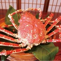 世界最大の蟹『高足蟹』