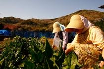 自家栽培の野菜・お米を提供しております。