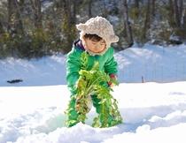キラキラの雪景色