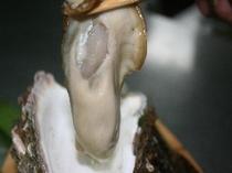 磯の香りふんわり岩牡蠣