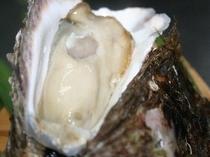 磯の香り岩牡蠣2