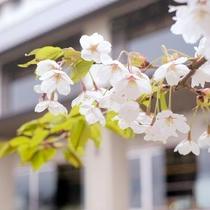 【春】外観