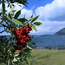 ◆豊かな自然を有する洞爺湖。