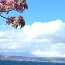 ◆春の洞爺湖