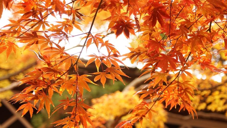 【庭園】美しい紅葉をご覧いただけます