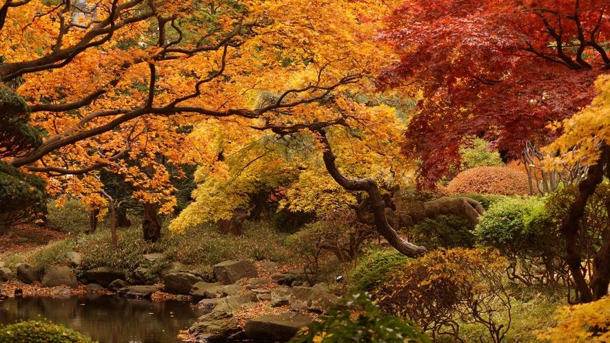 【日本庭園】啄木亭で紅葉狩り