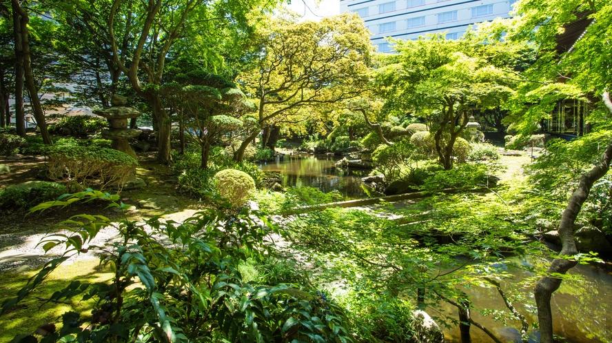 【日本庭園】まばゆい緑