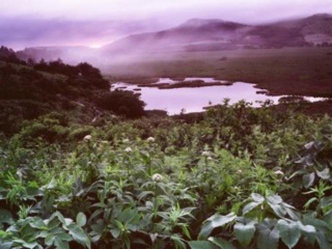 初夏の八島湿原