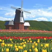 ◆【周辺観光】湧別町にある『かみゆうべつチューリップ公園』当館から車で約1時間15分程度