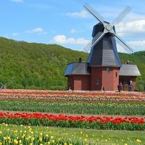 ◆【周辺観光】『かみゆうべつチューリップ公園』見頃の時期は辺り一面チューリップが満開です♪