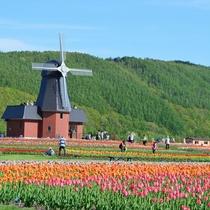 ◆【周辺観光】『かみゆうべつチューリップ公園』例年5月中旬から下旬が見頃となっております♪