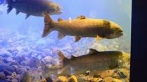 ◆山の水族館◆