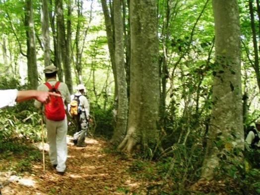 斑尾高原ブナの森ウオーキングプラン