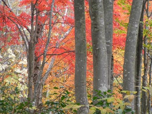 【秋冬旅セール】 斑尾高原ブナの森ウオーキングプラン