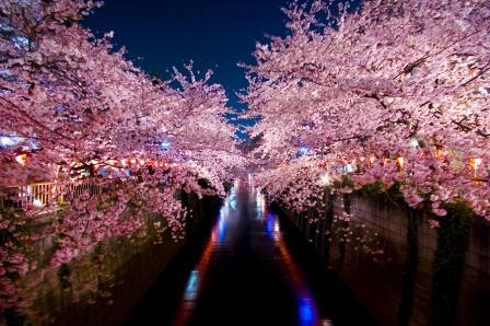 目黒川の夜桜(ホテルサーブ渋谷周辺)