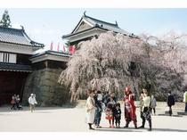 上田城跡公園桜祭りと真田武将隊