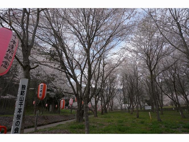 独鈷山千本桜