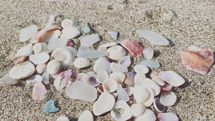 貝殻、シーグラス集めも楽しいよ
