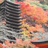 古都の花めぐり:談山神社の紅葉