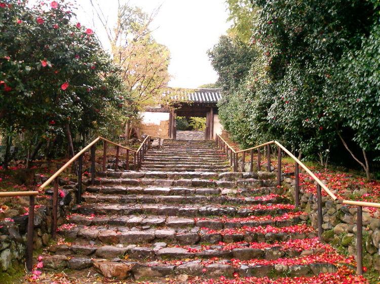 古都の花めぐり:白豪寺の五色椿