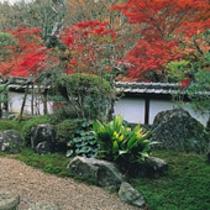 古都の花めぐり:正暦寺の紅葉