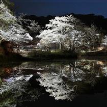 御船山楽園 夜桜ライトアップ