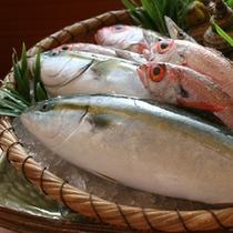 富山湾の鮮魚
