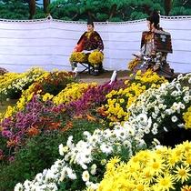 【秋】横手菊まつり 横手市10月頃~。古くから菊づくりが盛んな横手。横手市の秋の恒例行事。