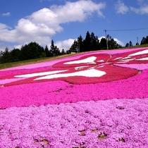 【春】横手市大森 芝桜5月頃~スキー場の斜面に植栽された約23万株の芝桜が花のアートをつくります