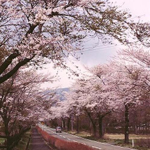 すぐ近くの七日原の桜です