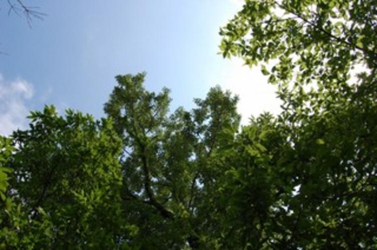 初夏の伊豆高原〜風を感じます〜