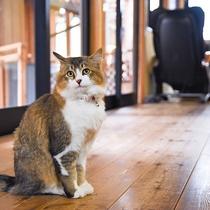 *【動物(猫・トム)2】出会えたらラッキー♪当館自慢の気まぐれ猫です。