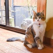 *【動物(猫・トム)】人懐っこい性格のトム。最近はよく館内に出没します。可愛がってあげて下さいね♪