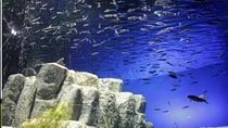 千歳さけのふるさと水族館
