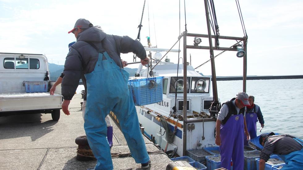*【しらす水揚げ】漁期(3〜7月、9〜12月)