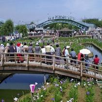「水郷潮来あやめ祭り」約500種類100万株のあやめが咲き誇ります。