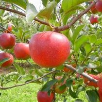 福島県のりんご