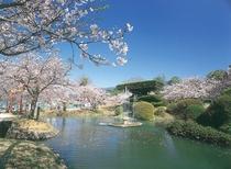 桜のきれいな景色